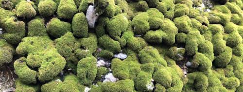 moss on rock wall